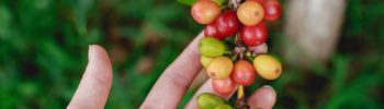 cafe-fruta