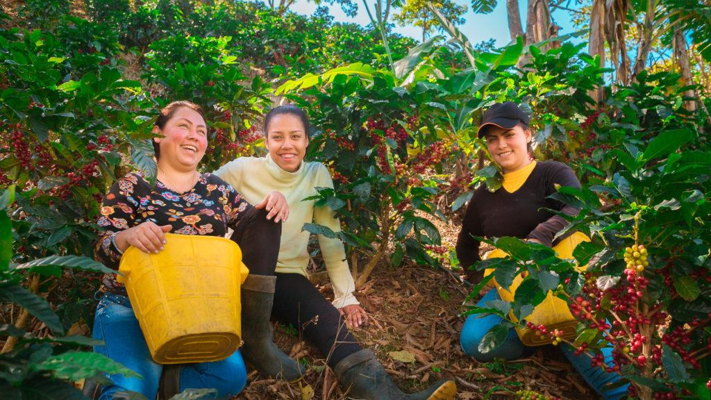 Mujeres en plantación de café